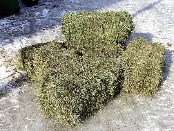 Square Bales   1st and 2nd crop. Call 218-273-6100 for pricing.